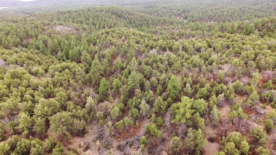 9+ Wooded Acres in the Mountains of Fremont County, CO