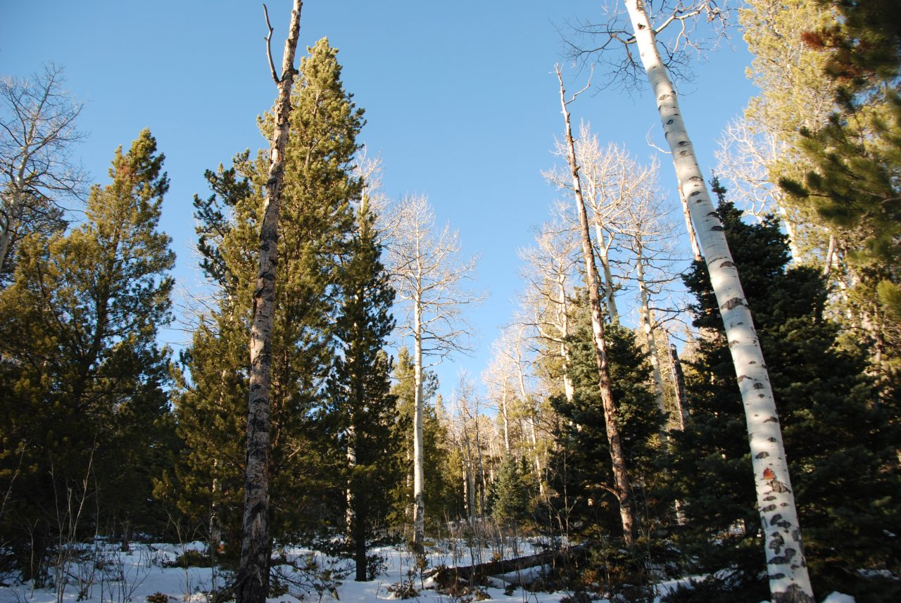 SOLD –> 4 Forested Acres in Forbes Park Colorado
