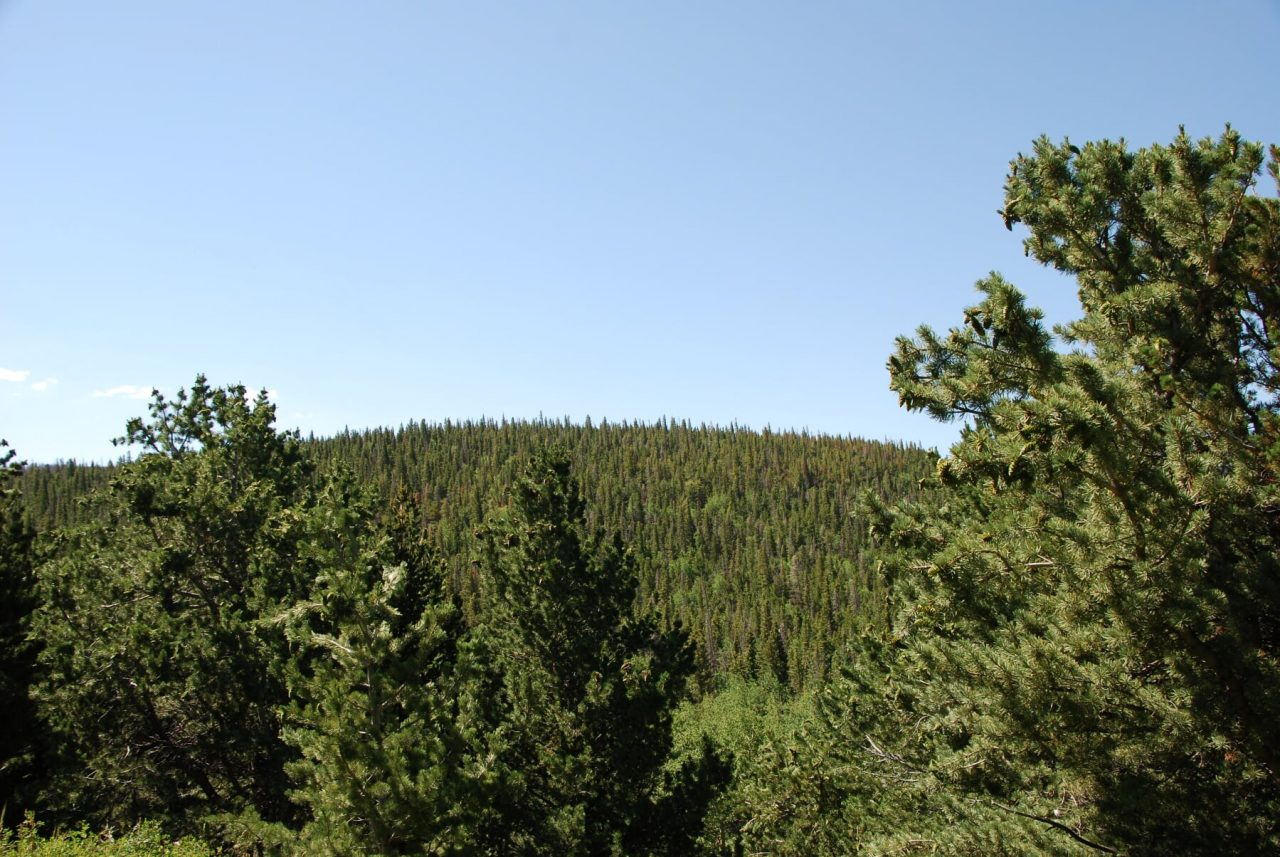 Beautiful Forested Lot in Forbes Park, Colorado