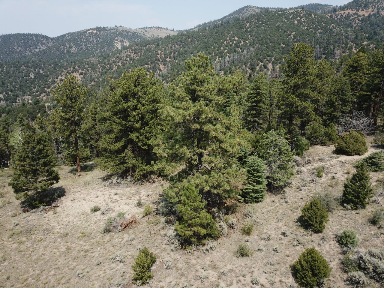 SOLD -> Gorgeous Mountain Views! 5.9 Mountainside, Pine-Covered Acres in the Sangre de Cristo Ranches